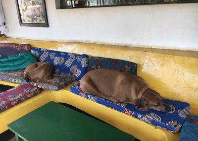 Hostal guests in Lilongwe