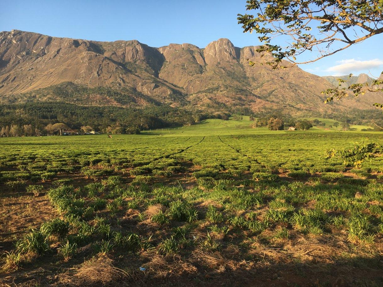Mountains and tea Mulanje Malawi - Zambia Malawi Mozambico 2018