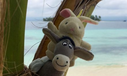 The Donkey and the Rabbit in Panama! Yayy!