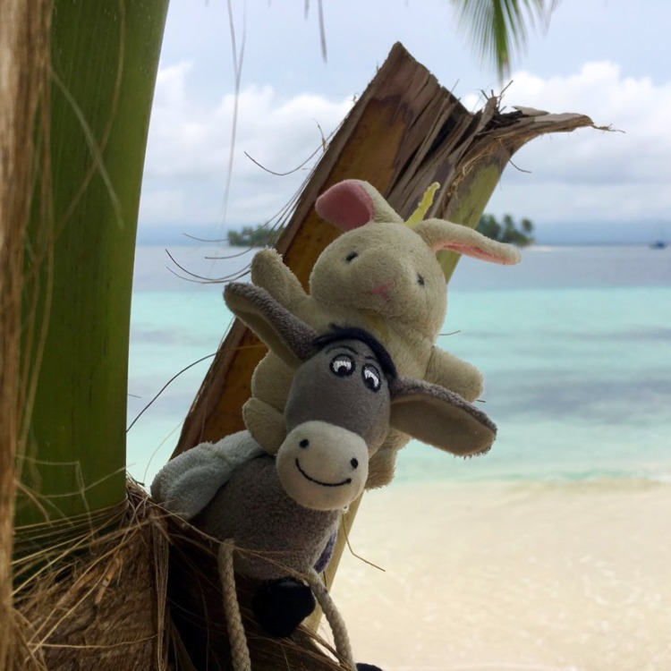 The Donkey and The Rabbit in Panama!