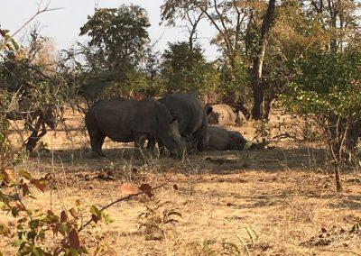 Rhino's family in Zambia