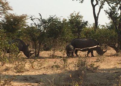 Rhino's group in Zambia