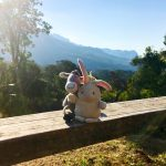 The Donkey and The Rabbit in Mulanje Mountains, Malawi