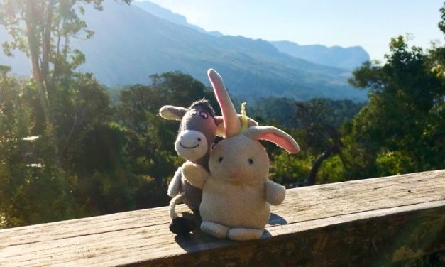 The Donkey and The Rabbit in Mulanje Mountains, Malawi