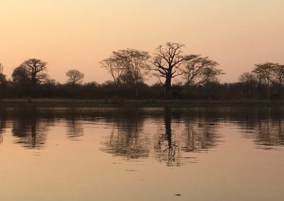 Tree reflex on the river - Liwonde National Park