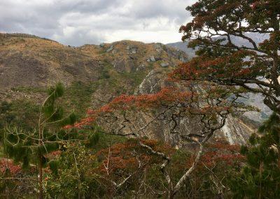 Trees and mountain - trekking on Mount Mulanje - Malawi