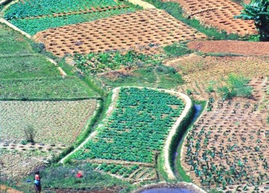 Working in the fields of Madagascar