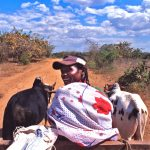Riding a Zebu Cart in Madagascar