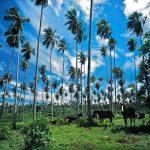 Sava'i Island – Samoa