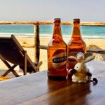 Donkey and Rabbit in Tofo Mozambique