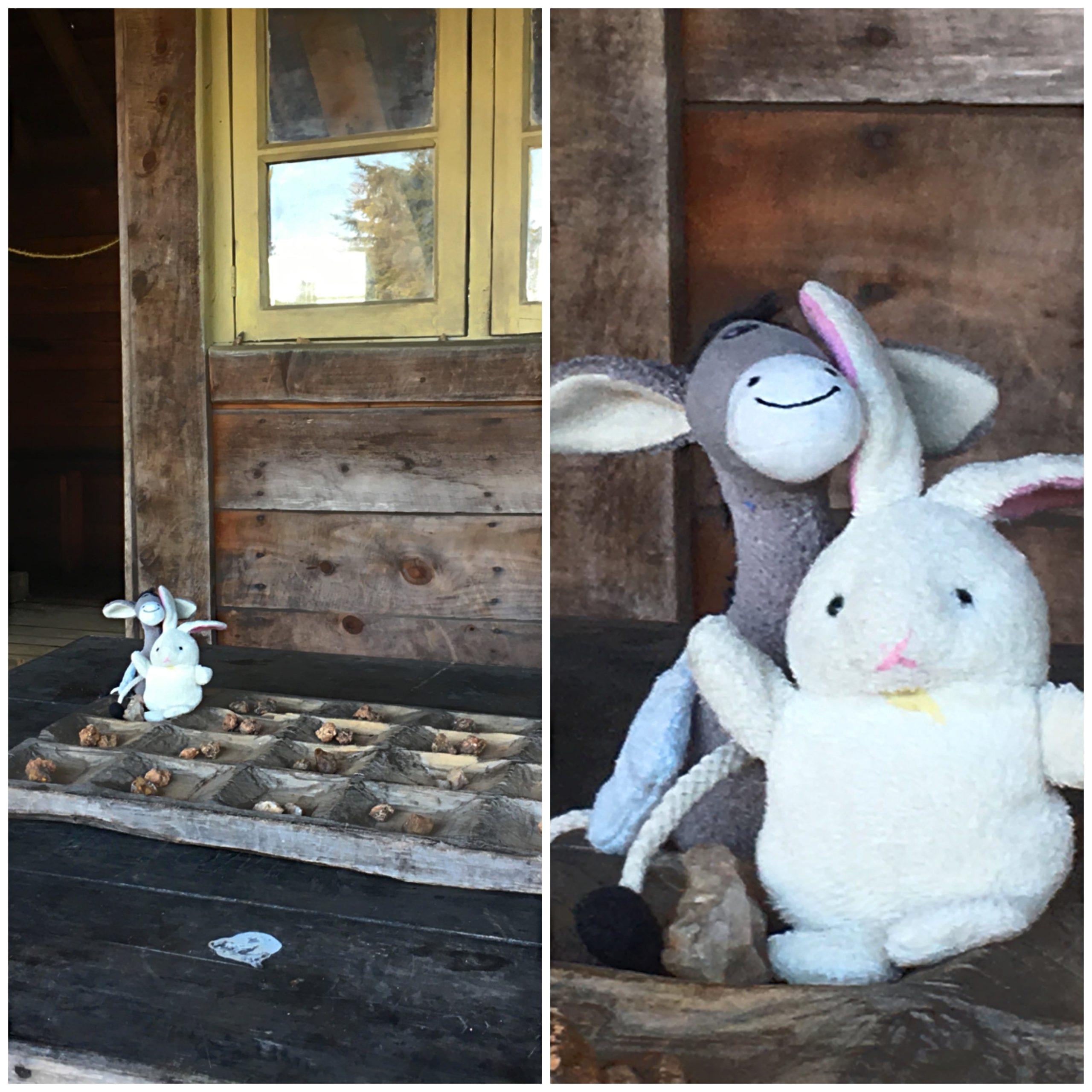 Donkey-and-Rabbit-at-home